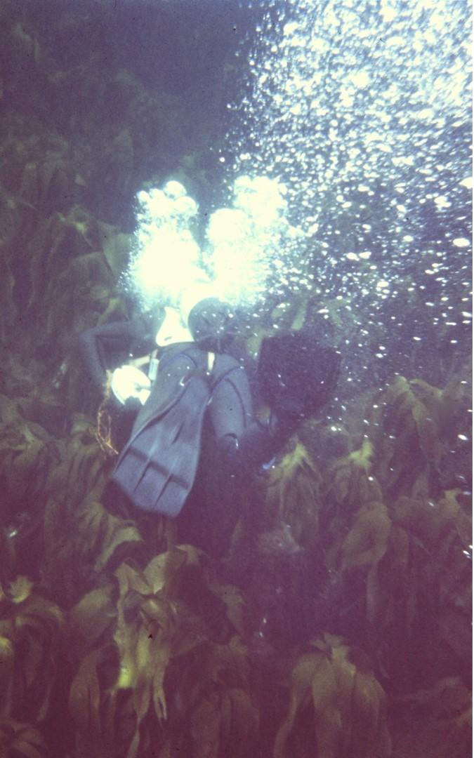 Diver-in-kelp