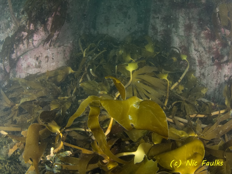 Beast from the east has ripped up lots of kelp.